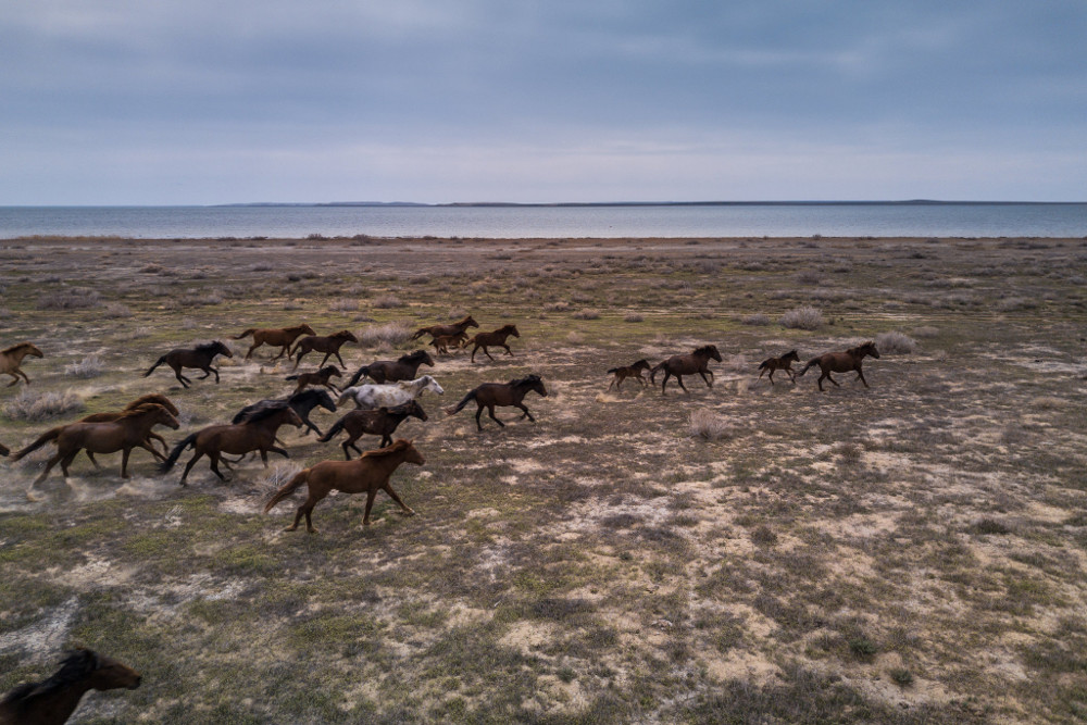 Horses galloping on the former seabed in Kazakhstan. Sergey Ponomarev for The New York Times